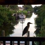 i think the birds can smell my ahi tuna!