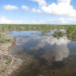 mangrove savanna at the end of the lagoon