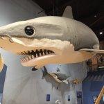 Foto di South Carolina State Museum