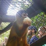 KSTR Monkey Tour Foto