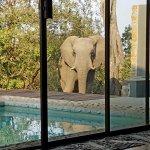 Elephant at room 5