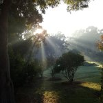 morning rays in the lush greenery around Gilgara