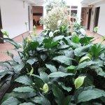Pflanzen im Korridor gibt ein Treibhaus effekt!