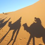 You are looking for a Sahara Trip ? Choose one taking you the dunes of Merzouga