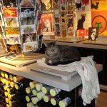 Feline museum assistant