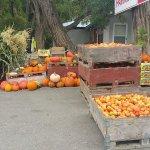 Lots of fall harvest in September