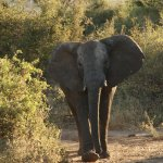 Photo de Imbabala Zambezi Safari Lodge