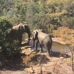 Elephants havind a drink at the water hole just below the hotel deck