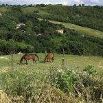 Photo de Agriturismo il Moro