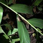 Lago Mindo Frog Concert Foto
