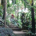 intérieur de la serre tropicale