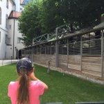 Fun to watch the horses walk