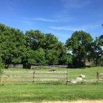 Photo de Lucky Dog Farmstay