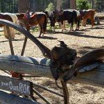 The horses at Camp Richardson Corral