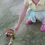 很多小動物可以和小孩親密接觸,園區內很乾淨、舒服,一票到底小孩玩的超開心