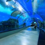 The tunnel in the Aquarium that allows you to enjoy oceanic creatures while having rest