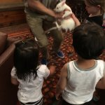 animal interaction in the main lobby