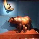 Photo de Museum d'Histoire Naturelle