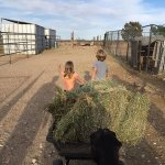 Two little farmhands
