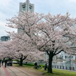 Photo de Kishamichi Promenade