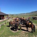 Horses saddled up for the morning rides