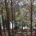 Photo of Dalat Edensee Resort & Spa