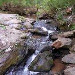 Dauset Trails