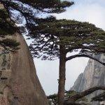 l'arbre symbole