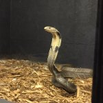 Serpentarium Magic