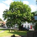 The old oak stocks