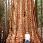 Photo de Mariposa Grove of Giant Sequoias
