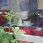 Coffee Cats照片