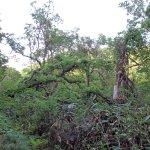Urabandai Wild Bird Woods