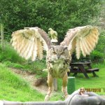 Falconry Experience Wales Foto