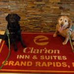 HOPE Animal Assisted Crisis Response dogs Ischgl and Katie Lynn at the Clarion