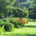 Lawns and flowers