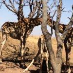 Horseback Africa Foto