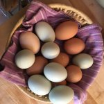 Eggs from the on-ranch chickens ready for breaking my fast.