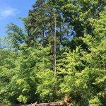 Lake Izac Pontoon Boat Ride, June 2016