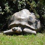 Huge turtles!