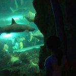 Foto de Underwater World and Dolphin Lagoon