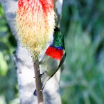 Double collared sunbirds abound in the well kept gardens