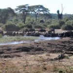 A variety of animals vist the waterhole througout the day and night.