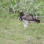 Around Tawi conservancy