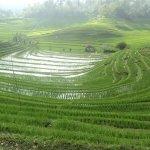 rizieres en terasse