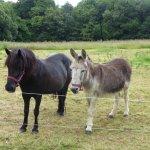 L'âne Gaston, le mâle et sa copine Léonce la jument. Inséparables ils s'adorent et nous de même.