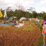 An educational walk in the rice padi filed.