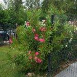Les Jardins d'Athena照片