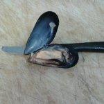 Pescheria il Granchio Intrigante