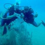 Foto de Northern Coast Diving